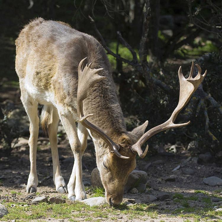 monte arcosu riserva cervi